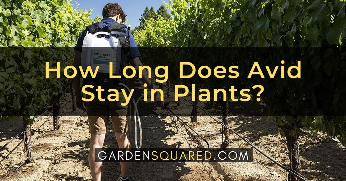 How Long Does Avid Stay In Plants