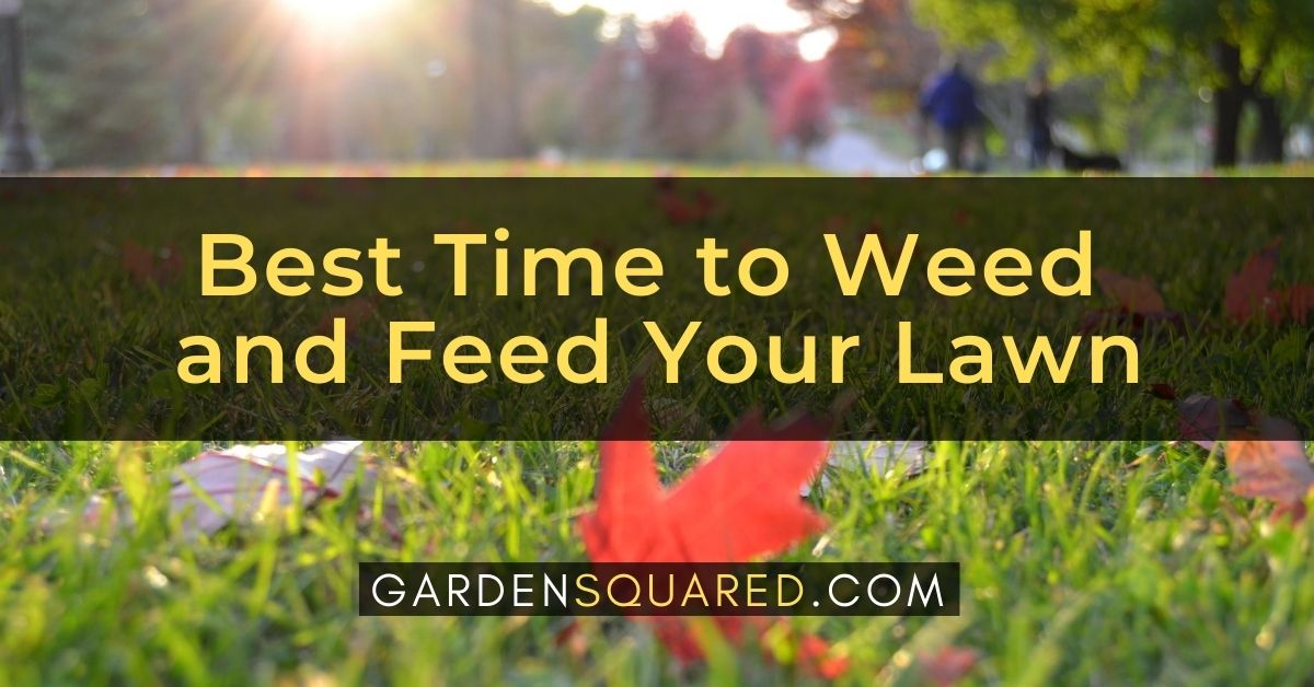 The Best Time To Weed And Feed Your Lawn