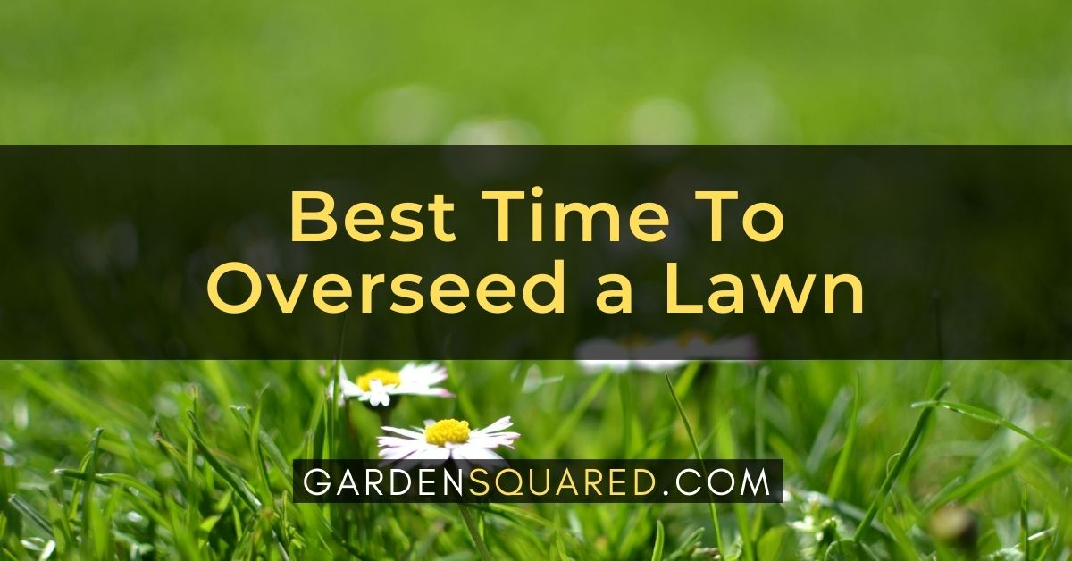 What Is The Best Time To Overseed A Lawn