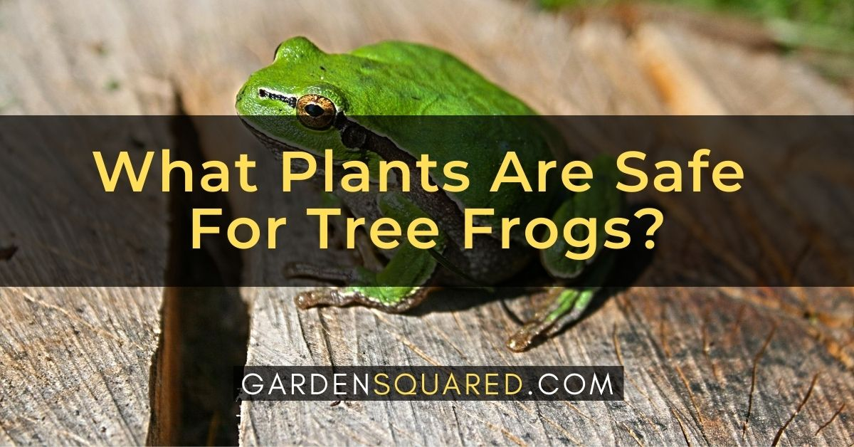 What Plants Are Safe For Tree Frogs