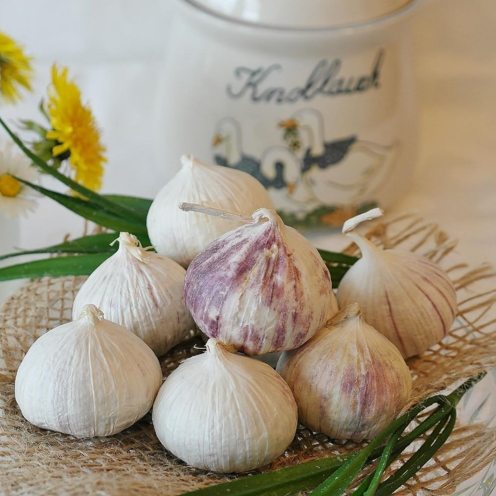 homemade repellents for galahs is the garlic repellent
