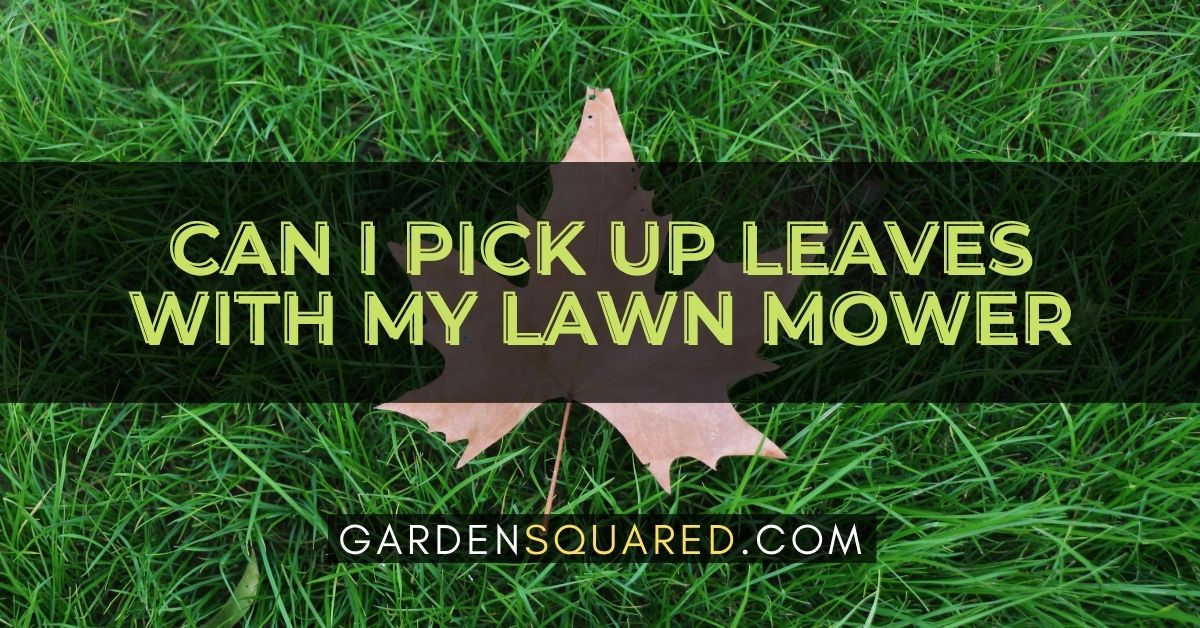 Can I Pick Up Leaves With My Lawn Mower