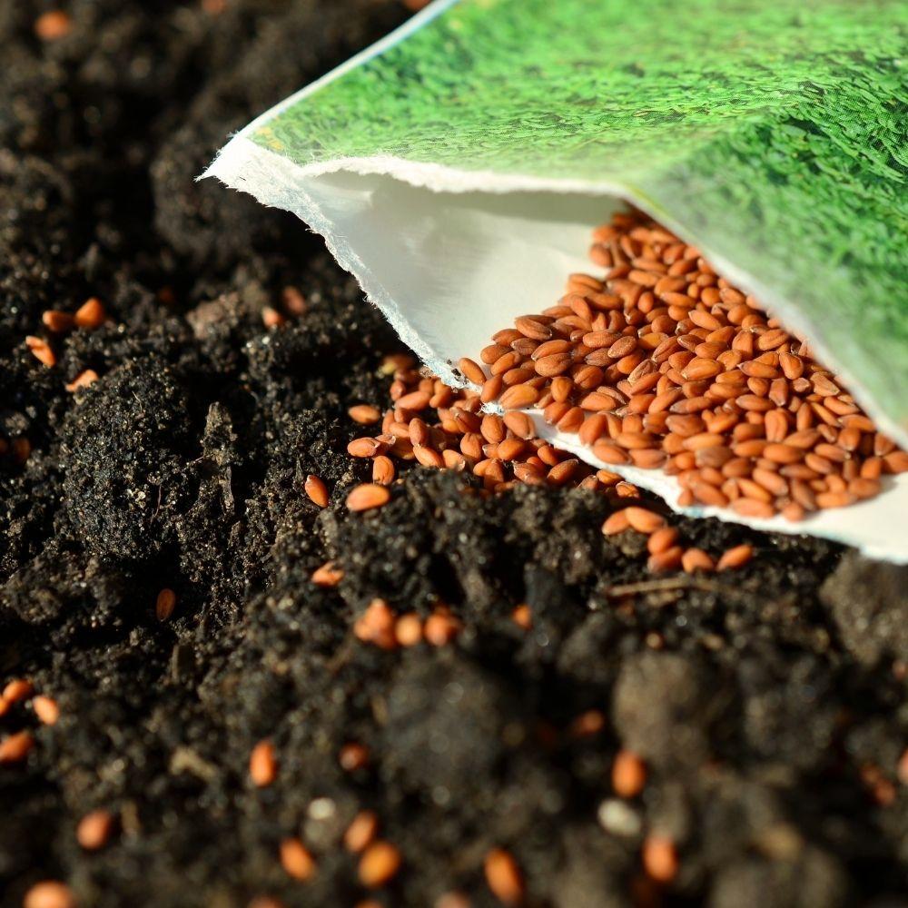 Fertilize Hydro seeded Lawn