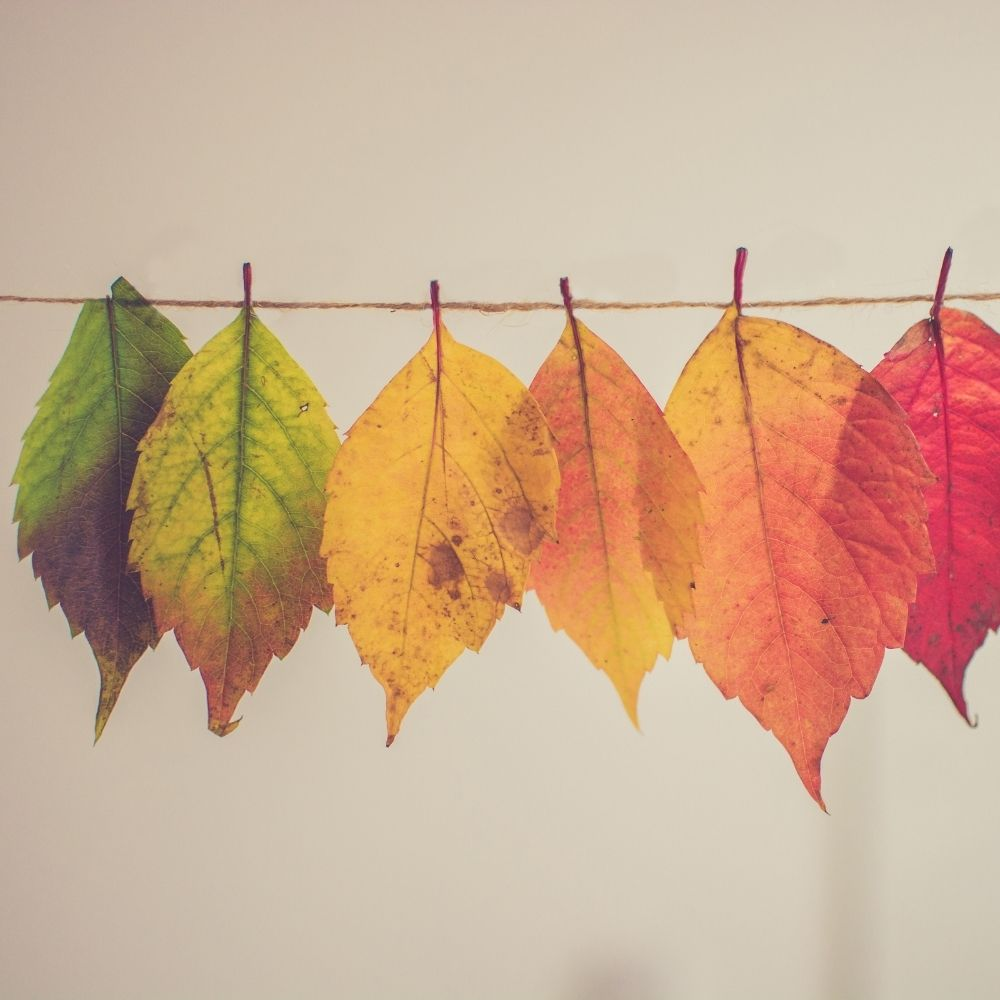 Wet or Dry Leaves