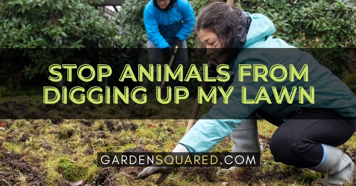 How Do I Stop Animals From Digging Up My Lawn