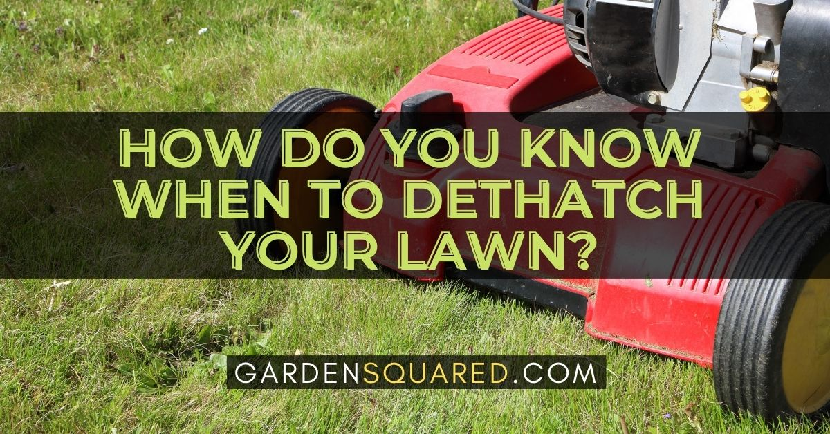 How Do You Know When To Dethatch Your Lawn