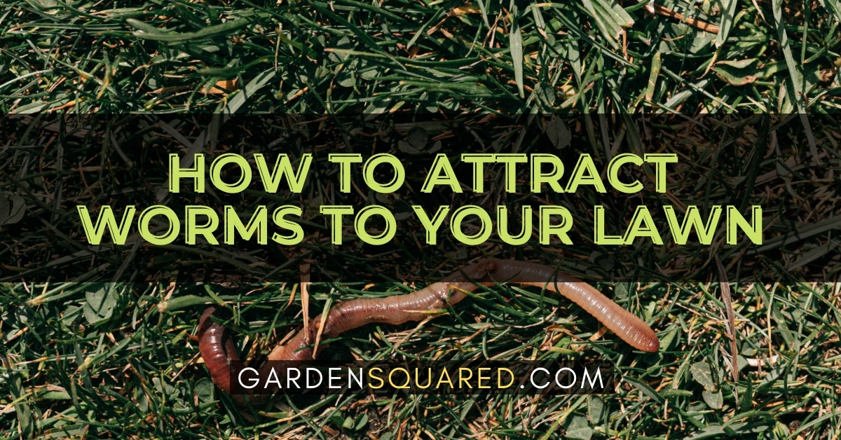 How To Attract Worms To Your Lawn
