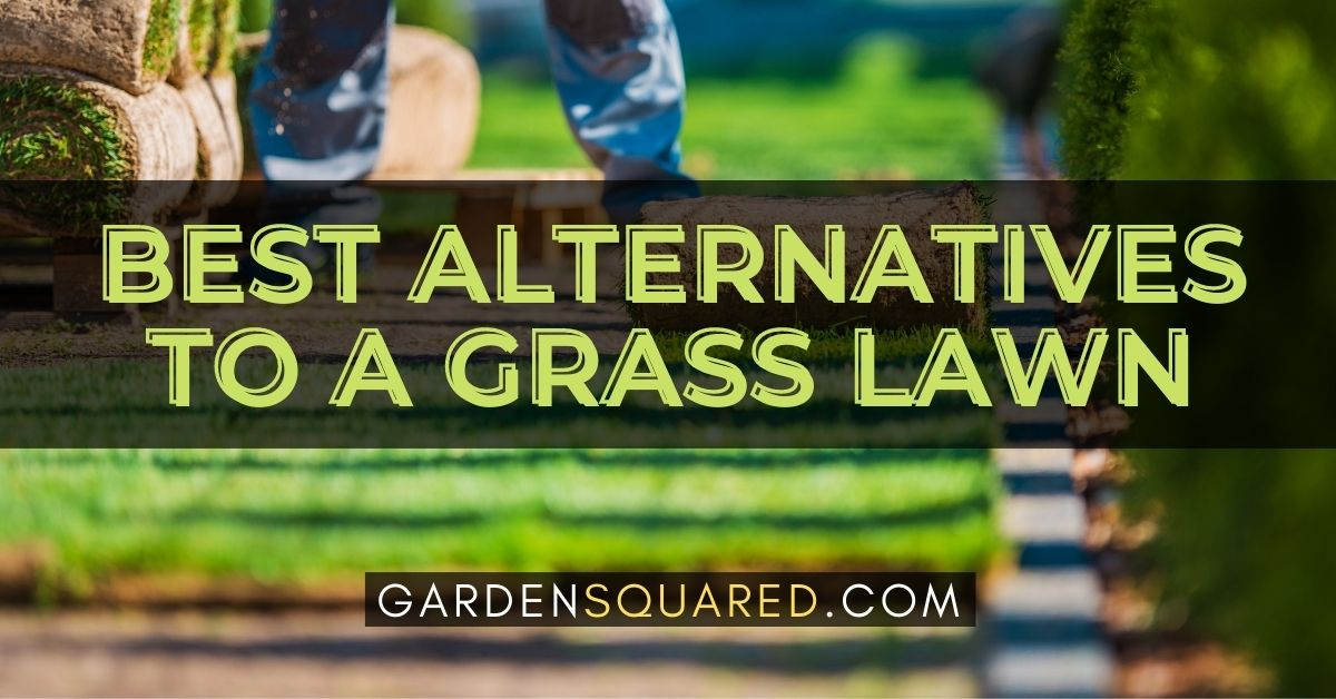 The Best Alternatives To A Grass Lawn
