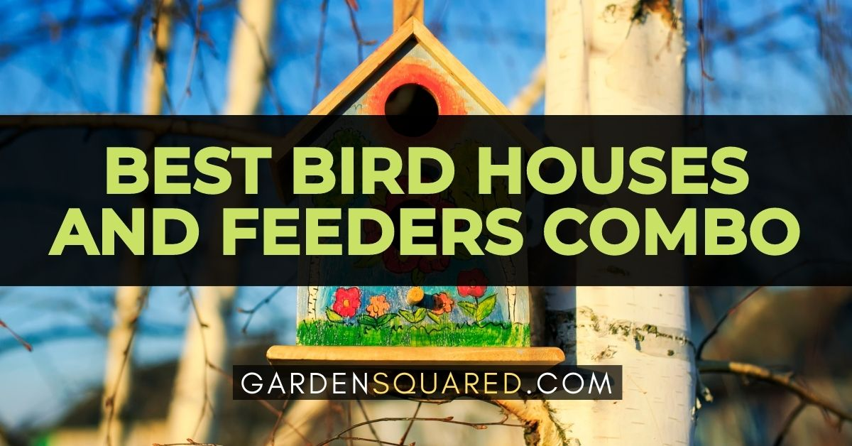 The Best Bird Houses And Feeders Combo