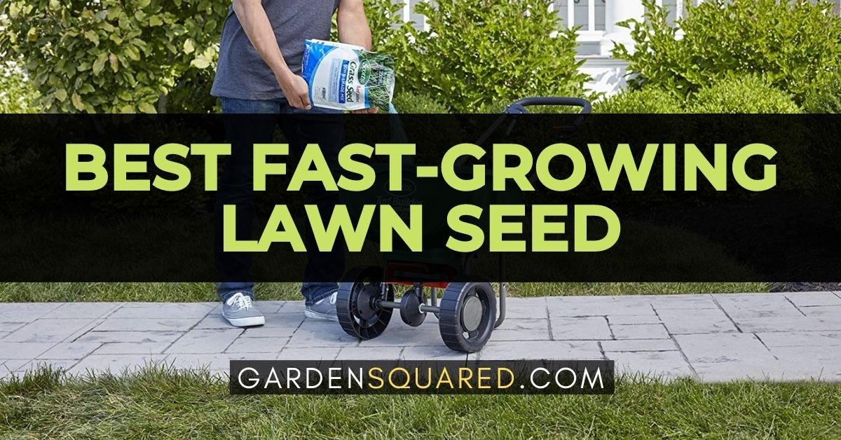 The Best Fast Growing Lawn Seed