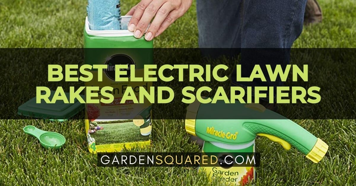 Best Lawn Fertilizers For Hot Summer