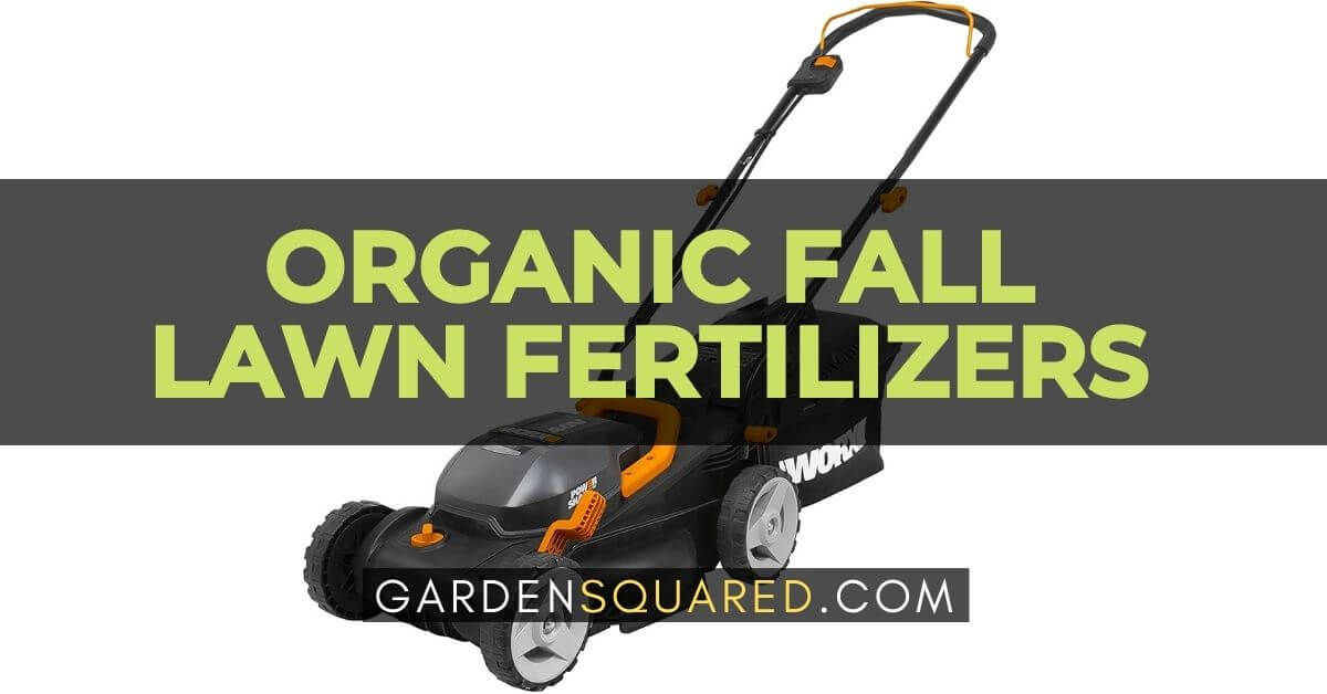 Best Mulching Lawn Mower For The Money