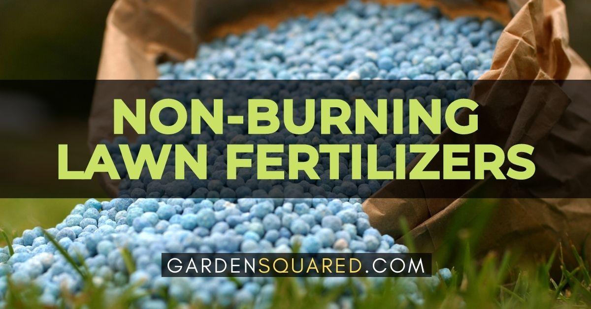 Best Non Burning Lawn Fertilizers