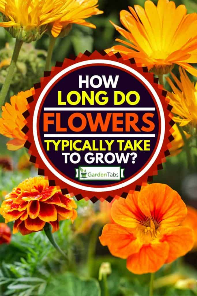 It consists of three or sometimes four reading passages of increasing difficulty, and there is a total of 40 questions to answer. How Long Do Flowers Typically Take To Grow? - Garden Tabs
