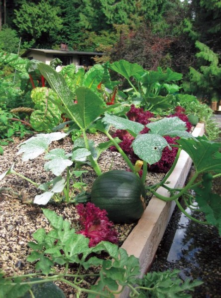 vegetable roof garden Grow up! Build an Edible Rooftop Garden - Garden Therapy