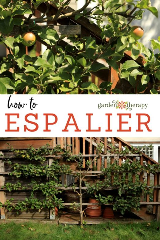 How to ESPALIER small trees to grow fruit in a small space