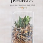 Create A Gorgeous Soilless Terrarium Garden