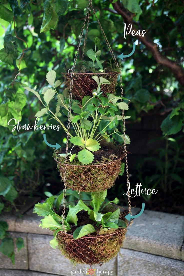 vegetable gardening in hanging baskets