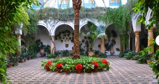Courtyards of Cordoba