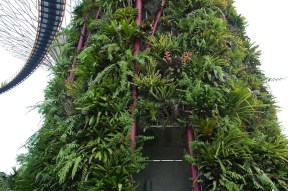 Super Tree 'trunks' covered with bromeliads