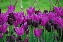 Vibrant spring colour