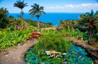 Tropical Hawaiian garden