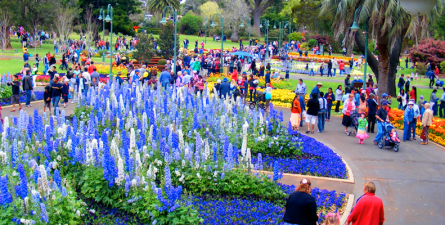 Toowoomba's Carnival of Flowers