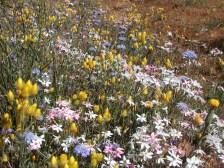 Wildflowers of Western Australia6