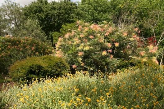 L-hirondelle garden2
