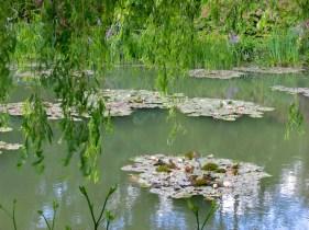 Monet's garden2