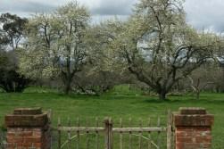 Brickendon's fruit trees