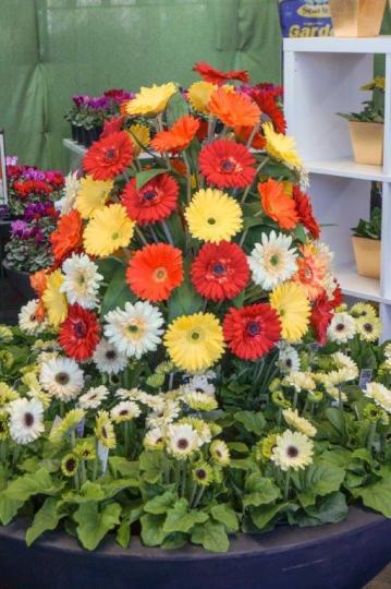 Queensland Garden Expo floral displays