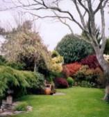 Early spring at Kamahi Cottage