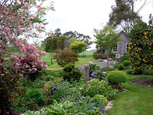 Our beautiful garden at Kamahi Cottage in spring