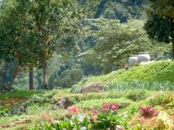 Mandulkelle Tea and Eco Lodge colourful gardens