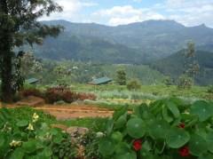 Mandulkelle Tea and Eco Lodge set amid tea gardens