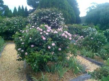 Chapel-House-Rydal-roses