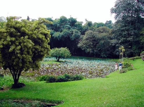 Sri Lanka Botanical Gardens in Peradeniya