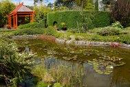 The Japanese Garden at Beluera House