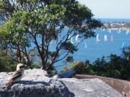 Sydney Harbour & Kookaburra
