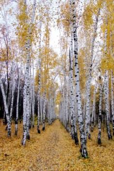 Autumn/fall in Saratov, Russia. Photo Tatters