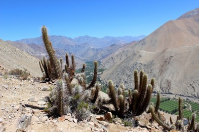 Chile, Paihuano cactus