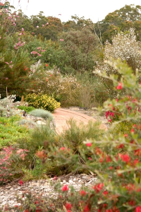 Cox native plant garden northern Sydney