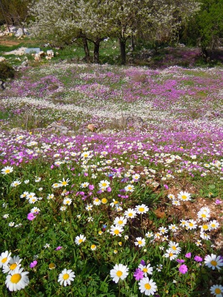 Greece, Corfu, Perithia - wildflowers