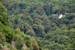 Greece, Halkidiki, Mt Athos - hillside forest