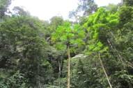 Peru- Tarapoto, the 'City of Palms'