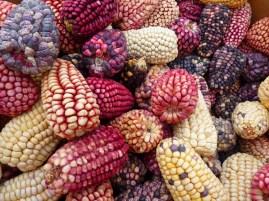 Peru - maize varieties