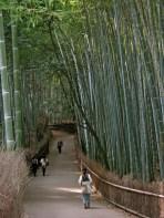 Tenryu-ji Temple Bamboo Grove, Kyoto