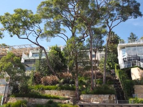 Cremorne waterfront garden. Design Seed Garden Design