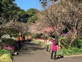 Royal Botanic Gardens Sydney spring walk